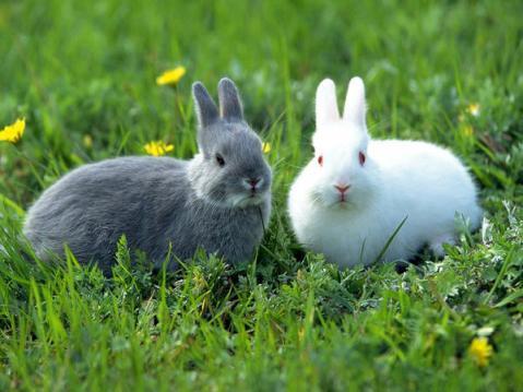 rabbit-pictures