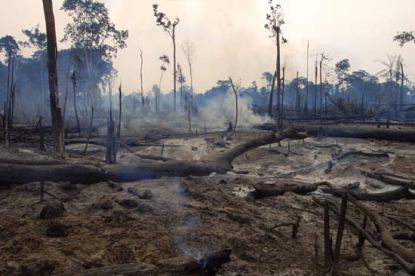 brazilian-rain-forest-destruction
