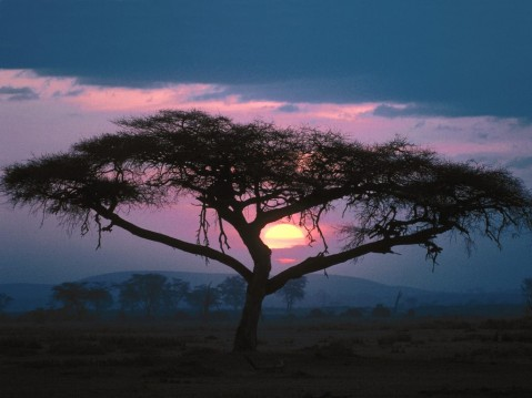 east_african_sunset_scene_wallpaper