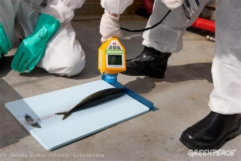 Greenpeace experts examine fish samples on the Rainbow Warrior to monitor radiation levels as the ship sails up the eastern coast of Japan on her way to Fukushima in May 2011