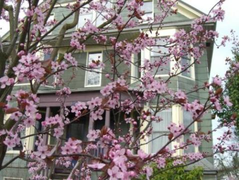 Emma's is beautiful in the Spring (their income sharing agreements are robust and complex year round).
