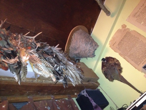 Shal's ceiling includes a bird's feathers cape, a wasps nest (empty) and a pheasant body.