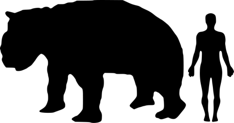 Giant Wombats are much larger than humans - except they have been dead for 40K years